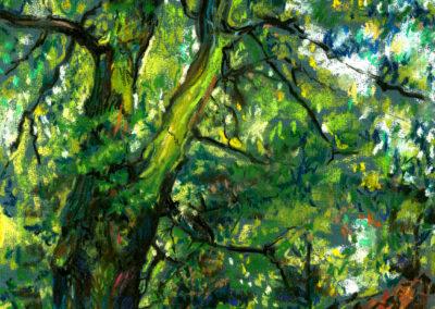 LYMM TREE